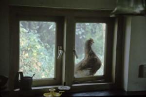 The Window, Achterdijk 27, 1988